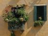 Fenêtre fleurie à San Zandegola à Venise