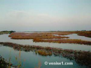 Barene de la lagune de Venise