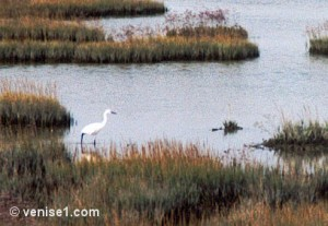 lagune-heron