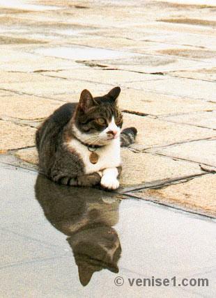 chats de venise