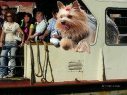 Toutes les infos pour visiter Venise avec un chien